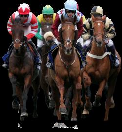 Racebook Software